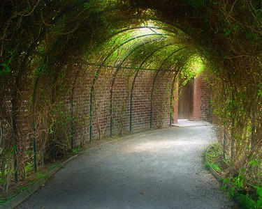 Living Tunnel  Recommended Sizes: 4 x 5, 8 x 10, 16 x 20
