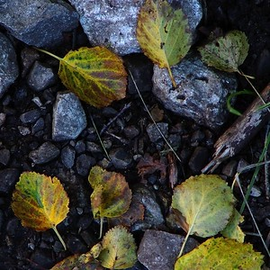 Autumn Ground Study  Recommended Sizes: 4 x 5, 8 x 10, 16 x 20
