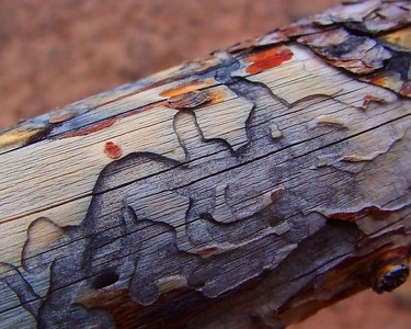 Bark Beetle Trails  Recommended Sizes: 4 x 5, 8 x 10, 16 x 20
