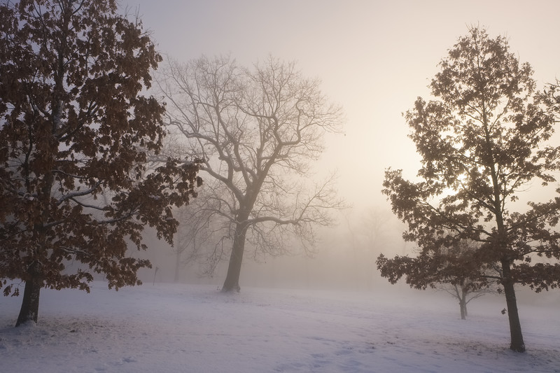 The Oaks in Winter Fog