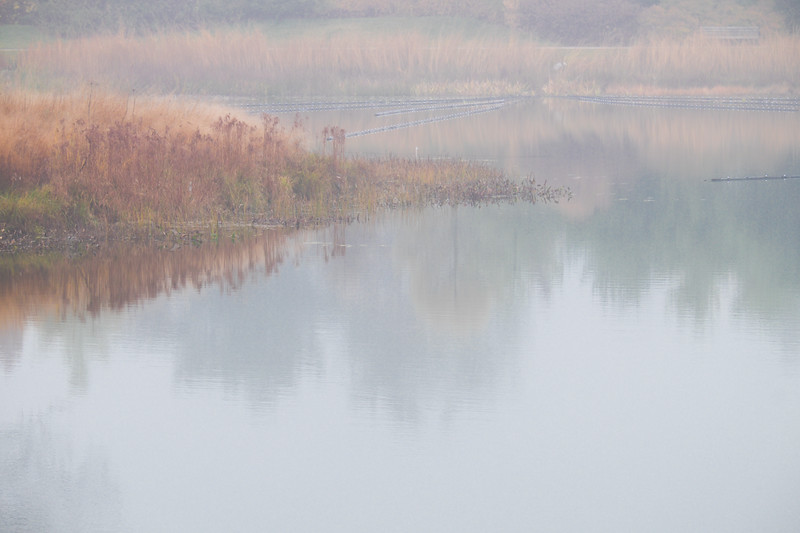 Meadow Lake Fog