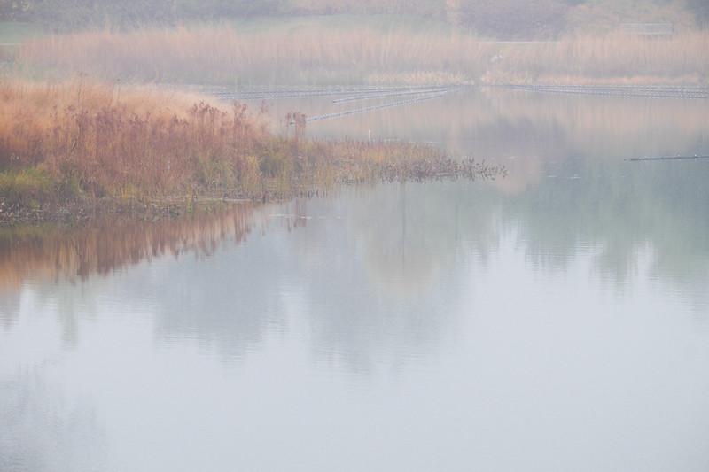 Meadow Lake Fog