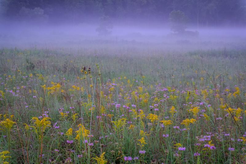 Dawn Prairie