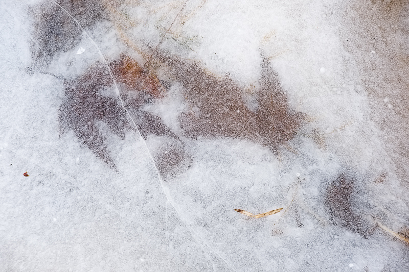 Maples Leaves in Ice