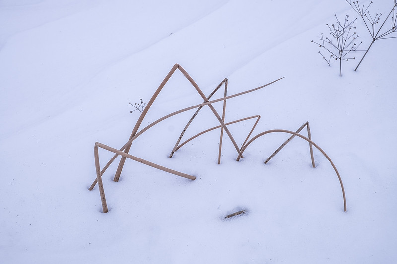 Signed, Winter Reeds
