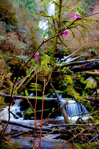 Munson Creek Falls, Oregon