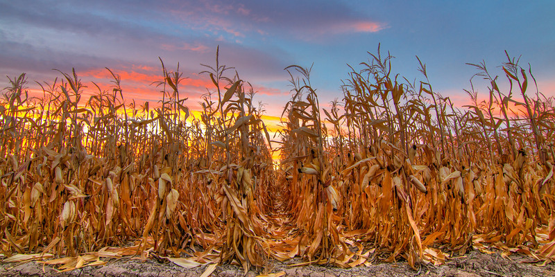 Dawn Over Ash Mesa Corn Field