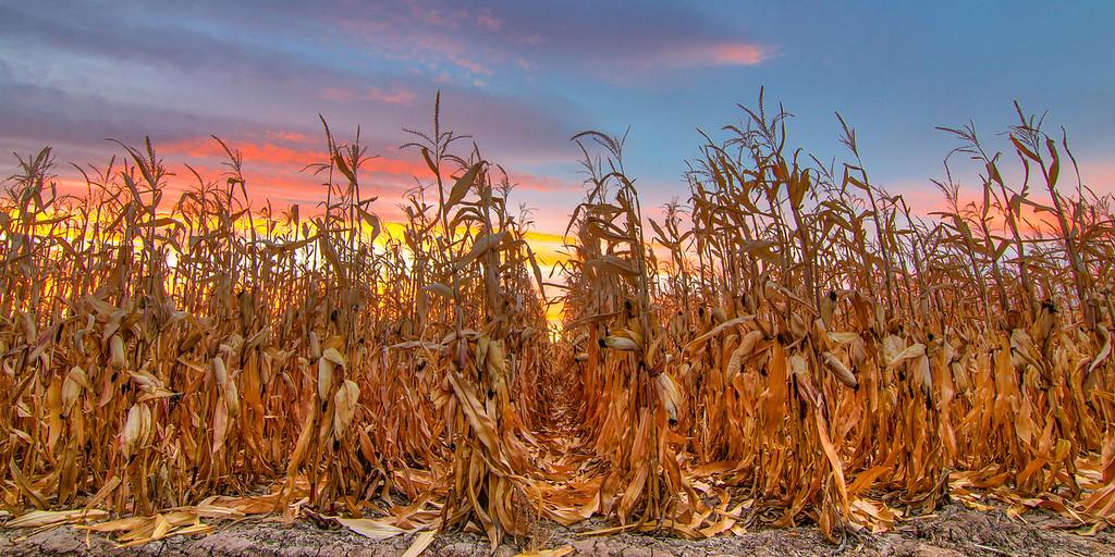 Dawn Over Ash Mesa Corn Field