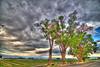 Ash Mesa Cottonwoods