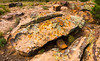 Cactus Park Rocks