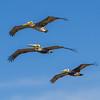 Squadron on Maneuvers