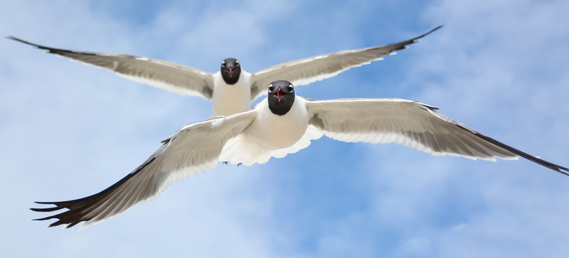 Yes, Seagulls really do love French Frys