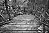 Black & White image of the wooden dock on the pond.