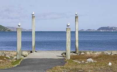 20070415 1245 Birds on Petone foreshore A A a