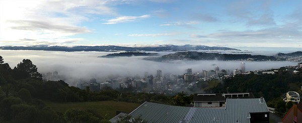Wellington foggy a