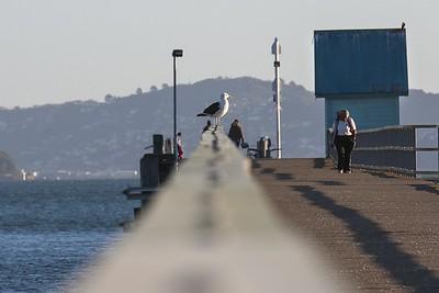 20140327 Petone Wharf _MG_9556 a