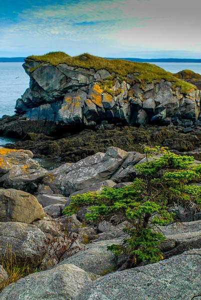 Rock Turtle - Maine