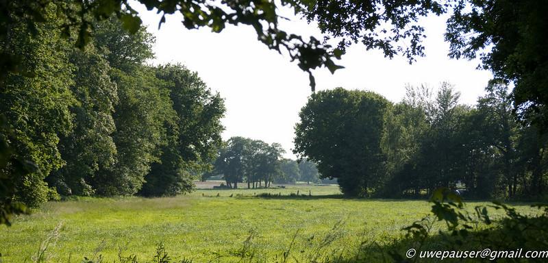 P1060324-Campo en Prisdorf, Schleswig Holstein, Alemania