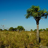 DSC01207 - Los Llanos (Flachland) de Venezuela