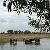 DSC01317 - Caballos salvajes en los Llanos de Venezuela