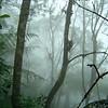 DSC00550-Parque Nacional Henry Pittier, Edo. Aragua