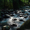 """DSC00045 - Parque Nacional """"Henry Pittier"""""""