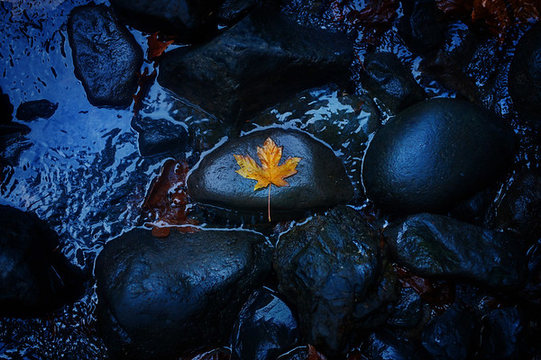 Leaf In The River