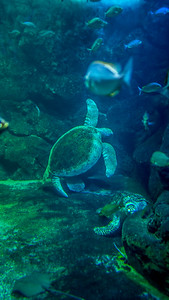 Turtle of the Sea
