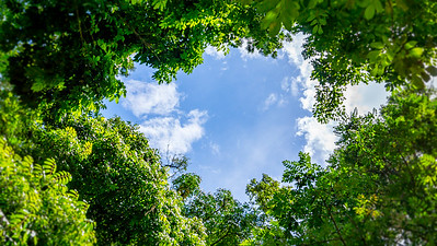 Through The Canopy
