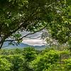 Borobudur Forest