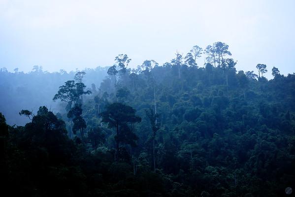 Jungle Haze