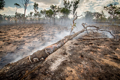 Western Australia. Land after a bush fire.
