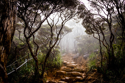 Trail through the cloud forest, Mount Kinabalu Borneo