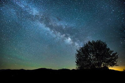 Milky Way over a tree, White Mountains, New Hampshire, USA