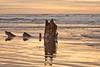 Sunset over Oregon Coast shipwreck.