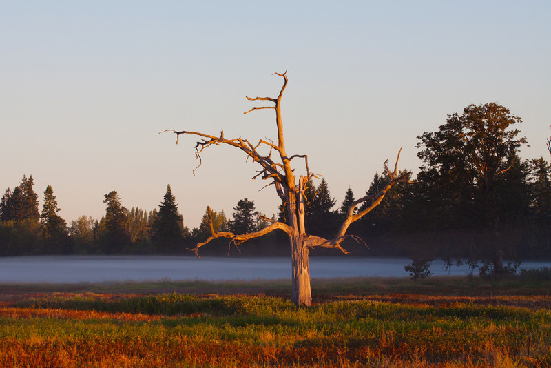 """Sunrise on dead tree.   """"Located on the outskirts of Portland, Tualatin River National Wildlife Refuge is one of only a handful of urban national wildlife refuges in the country. Situated within the floodplain of the Tualatin River, the Refuge comprises less than 1% of the 712 square mile watershed. Yet, due to it's richness and diversity of habitats, the Refuge supports some of the most abundant and varied wildlife in the watershed. The Refuge is now home to nearly 200 species of birds, over 50 species of mammals, 25 species of reptiles and amphibians, and a wide variety of insects, fish and plants. The Refuge has also become a place where people can experience and learn about wildlife and the places they call home."""" <a href=""""http://www.fws.gov/tualatinriver/"""">US Fish and Wildlife Service</a>"""