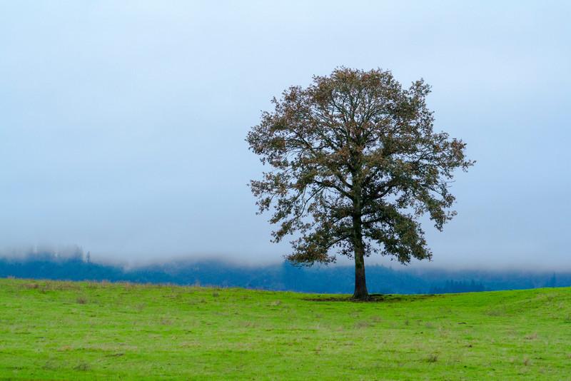 Lone tree on Sauvie Island