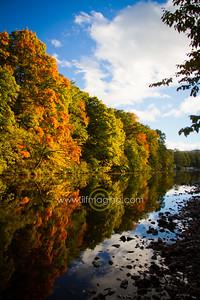 ILF 15 Autumn on the Teviot (10)