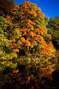 ILF 15 Autumn on the Teviot (3)