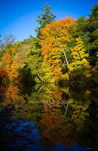 ILF 15 Autumn on the Teviot (1)