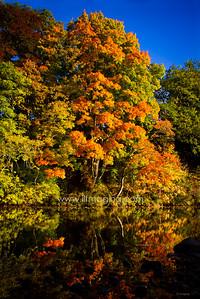 ILF 15 Autumn on the Teviot (4)