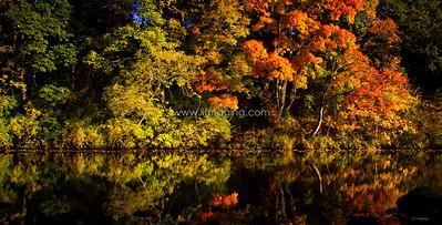 ILF 15 Autumn on the Teviot (2)