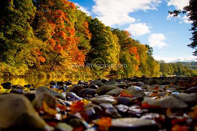 ILF 15 Autumn on the Teviot (7)