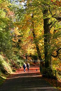 (B002)Autumn Walk