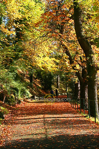 (B003) Avenue Autumn 2006