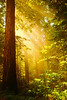 Inpiring Redwoods