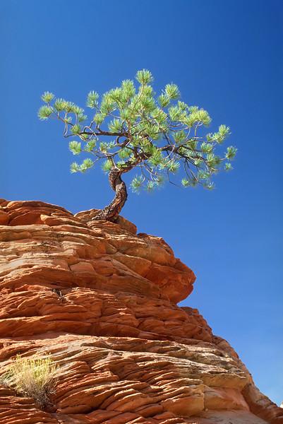 Tree Overcoming Adversity