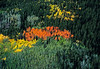 A patchwork of autumn colors in a conifer and aspen forest
