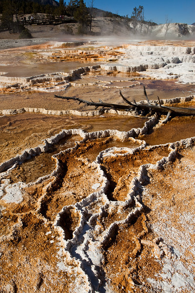 The Mammoth Hot Springs in Yellowstone National Park feature travertine terraces formed from limestone. Thermal waters rise through the limestone, carrying high amounts of dissolved carbonate. At the surface, carbon dioxide is released and calcium carbonate is deposited as travertine, the chalky white rock of the terraces. Due to the rapid rate of deposition, these features constantly and quickly change.