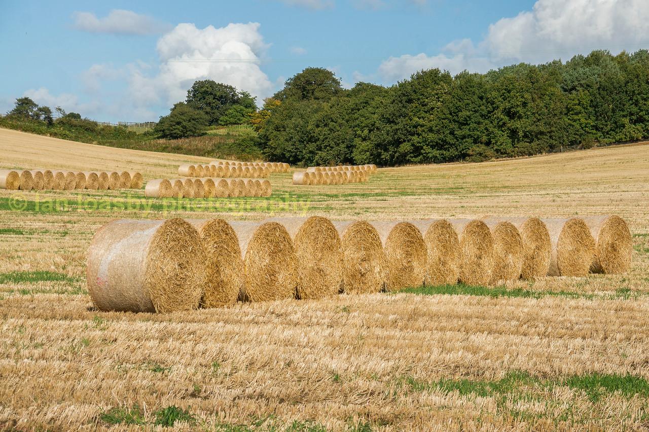 Hay bales in a Norfolk field